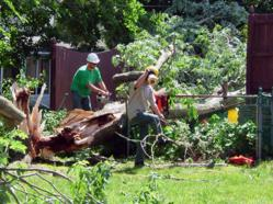 Emergency Tree Removal in Huntingdon Valley PA
