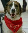 dogr rescue kill shelter rescue, kill shelter recue dogs,amazing grace,anilmal gas chambers,pet euthanasia, saving shelter dogs,animal rescue