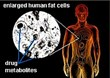 Narconon Louisiana Explains Drug Toxins Stored in Fat Cells