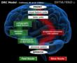 A picture of a human brain, with an overlay of the DRC reading model, depicting the slow or decoding route and the fast or lexical route for reading.