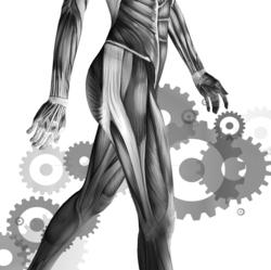 Gait Training - Physical Therapy Continuing Education