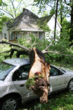 Need Help Cleaning Up from the Storm? Seva Call Adds Tree Removal...