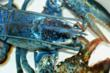 Rare Blue Lobster to Celebrate Nation's Independence at National...
