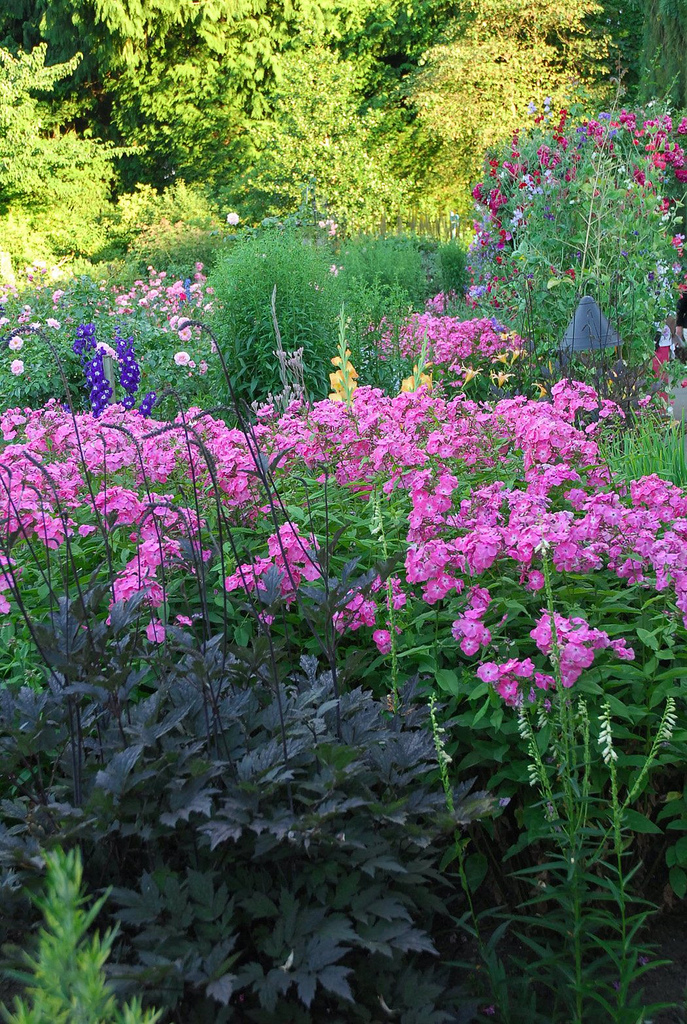 Cottage gardens tesselaar plants offers these tips for for Cottage garden plants