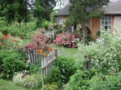 Cottage Gardens Tesselaar Plants Offers These Tips For