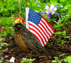 A robin in a garden next to a tiny American flag.
