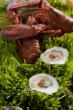 Guest's at The Cliff House Resort & Spa can enjoy fresh Maine lobster in our oceanview dining room.