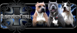 Alabama Iron Pitbulls