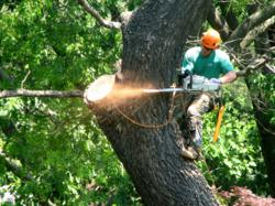 When a tree becomes a safety hazard, tree removal is the best way to protect valuable property