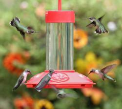# 6145 JB's Hummingbird Feeder