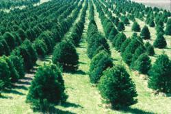 Christmas Farms