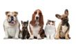Pet Supplies Online Australia