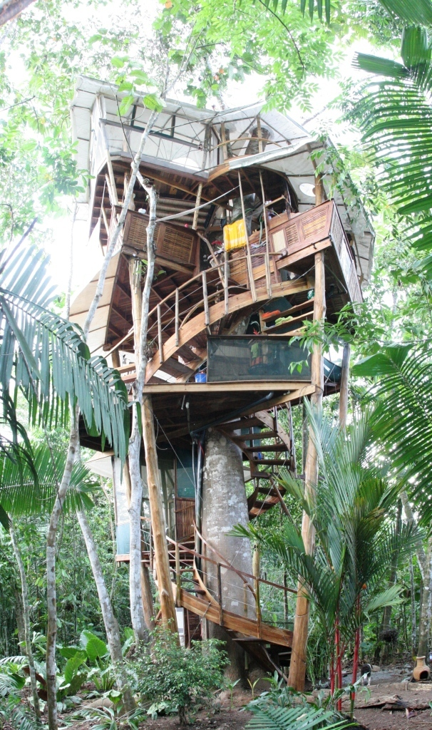 Tree house houses homes building custom home amazing cool eco