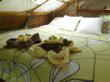 costa rica lodging accommodations luxury rentals central america rainforest jungle monkeys