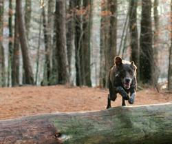 Emma running jumping over a log hoping to win Clear Conscience Pet Natural & Healthy Dog Treats