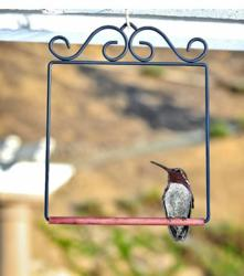 #298 Pop's Hummingbird Swing