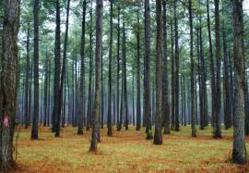 Forestry Sciences @ ScienceAlerts.com