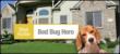 Bed Bug Dog Detector