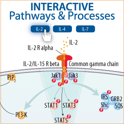 Interactive Pathways and Processes from R&D Systems
