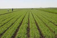 Agriculture @ ScienceIndex.com