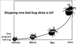 Bed Bug Infestion Timeline Growth Population