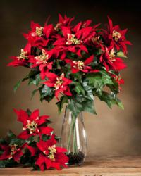 Silk Poinsettia Large Stems