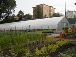 Dorchester's ReVision Urban Farm