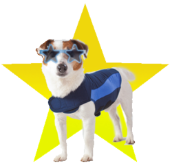 Thundershirt Star Contest