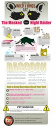 Raccoon Rabies Infographic