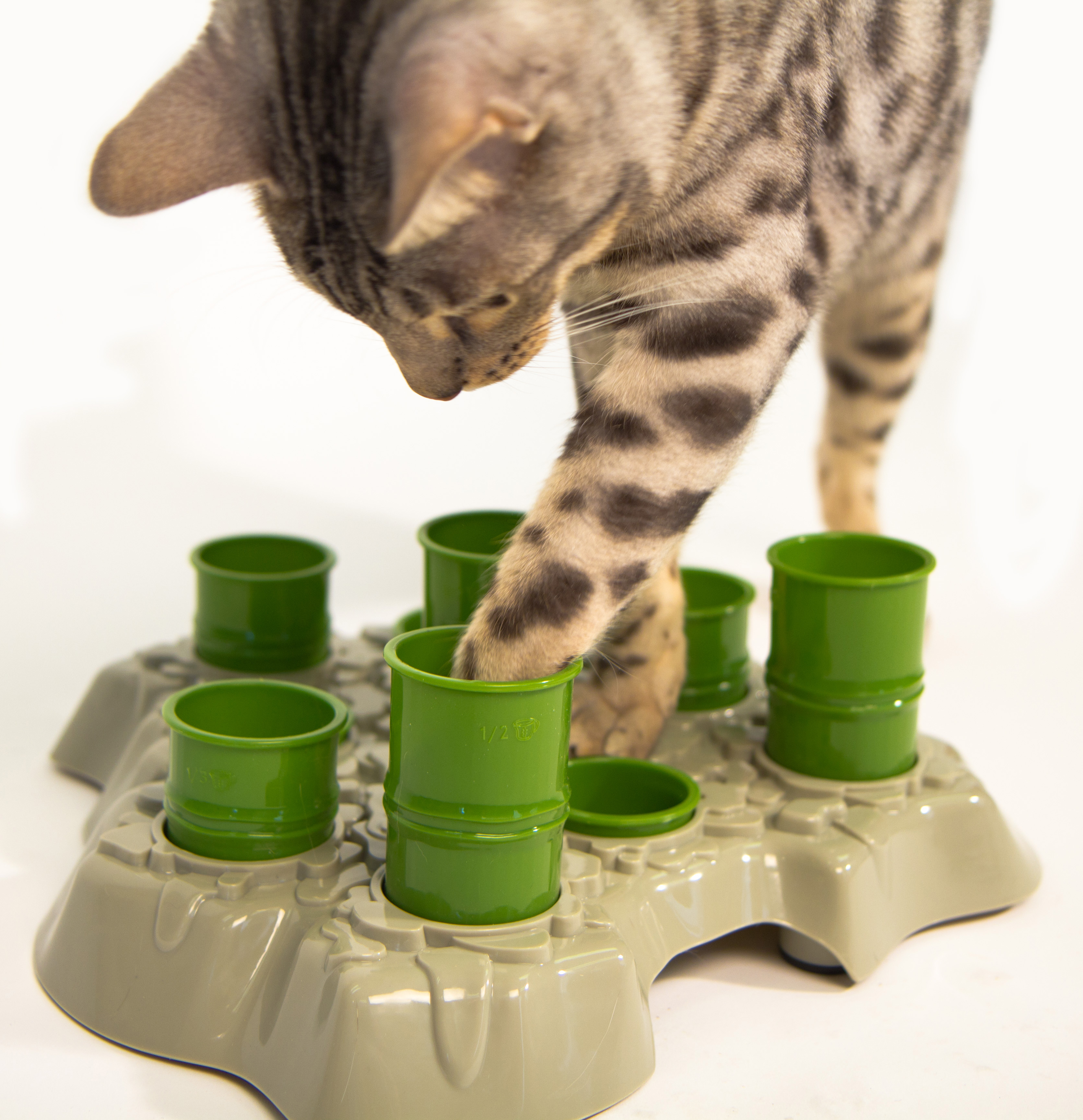 animals automatic feeder for tiny cats cute timed attachment n cat
