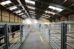 Auction sale abattoir