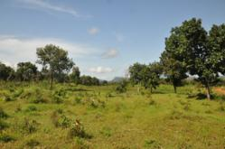 Guinea agriculture land