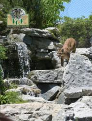 FCF Convention goers visit the Cincinnati Zoo