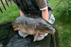 Carp caught using Sticky Baits