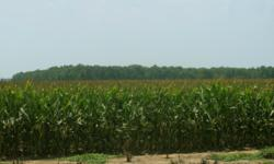 Arkansas farm land, Corn Belt drought, Investment land for sale, Arkansas investment land for sale, Arkansas cropland for sale, state of Arkansas corn, Arkansas corn 2012 drought