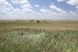Kiowa County Land, Kiowa County Mineral Rights, Kansas Land Auction, Kansas Land for Sale, Kansas Mineral Rights Auction, Kansas Mineral Rights for Sale, United Country Real Estate