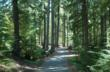 Narrow interior road in Adam Forks campground in Gifford Pinchot National Forest (WA)