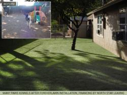 K9Grass play area at Many Paws Kennels