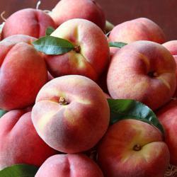 Fresh Oregon Peaches