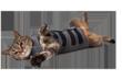 Thundershirt for Cats