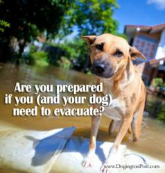 Are you prepared if you (and your dog) have to evacuate?