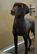 Midwestern Company Asks Americans to Support Four-Legged Victims of...