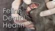 How To Brush Your Cat's Teeth At Home - Part Two of...
