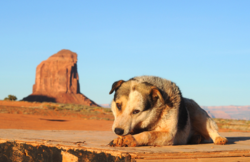 Pet Friendly Resort in Moab - Sorrel River Ranch