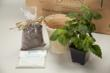 Your potted herb kits comes ready to assemble
