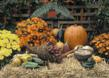 This is a Business Greeting Card with the image of a Autumn Harvest.