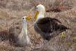 Galapagos islands birldlife