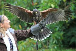 make your way to Ireland's First School of Falconry at Ashford Castle where you will fly a hawk around the spectacular gardens and woodlands of Ashford Castle in a private one-hour Hawk Walk.