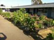 "Davis Magnet School's onsite garden, in which students grow various plants and vegetables, and in which they use the ""fruits of their composting labors."""