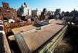 "Roof of P.S. 41 in Greenwich Village: ""Before"""